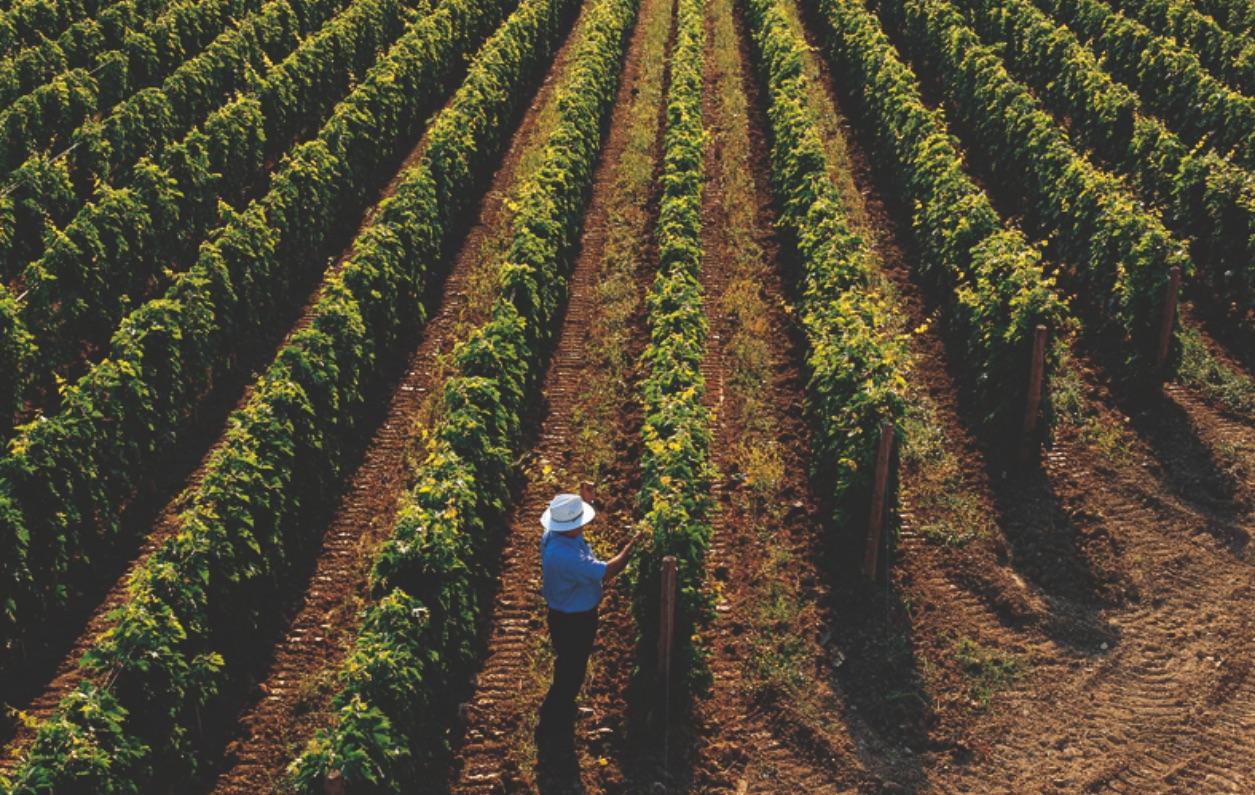 Il profumo della mia terra, il sapore del mio vino