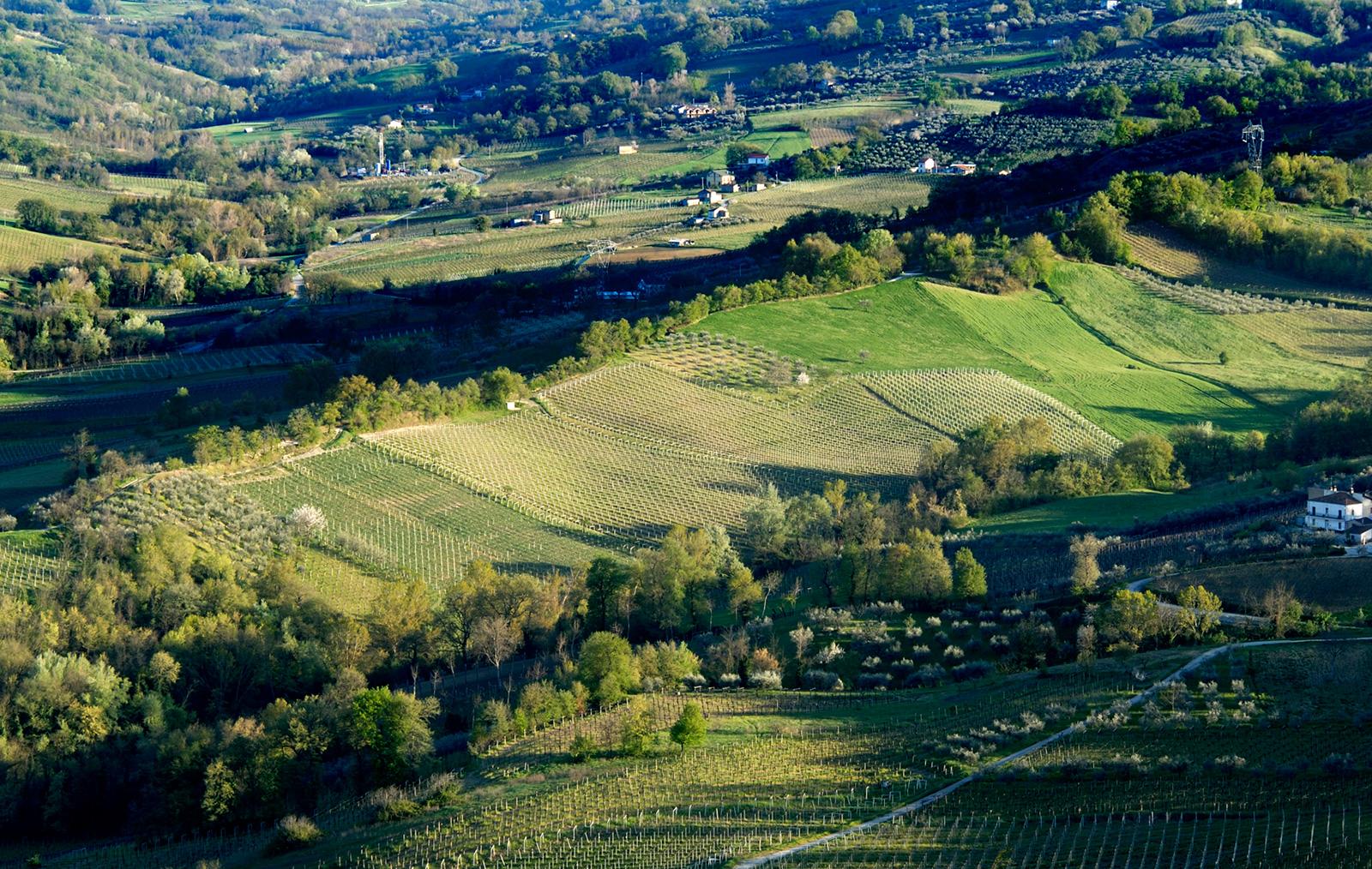 Masciarelli Tenute Agricole si è impegnata negli ultimi 30 anni a studiare e valorizzare il territorio agrario regionale, rivelando il potenziale vitivinicolo di una terra di forti contrasti – e quindi di terroir unici – come l'Abruzzo.